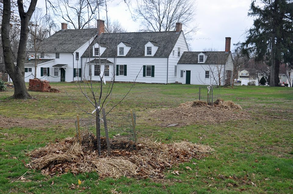 View of North Orchard of The Abraham Staats House.